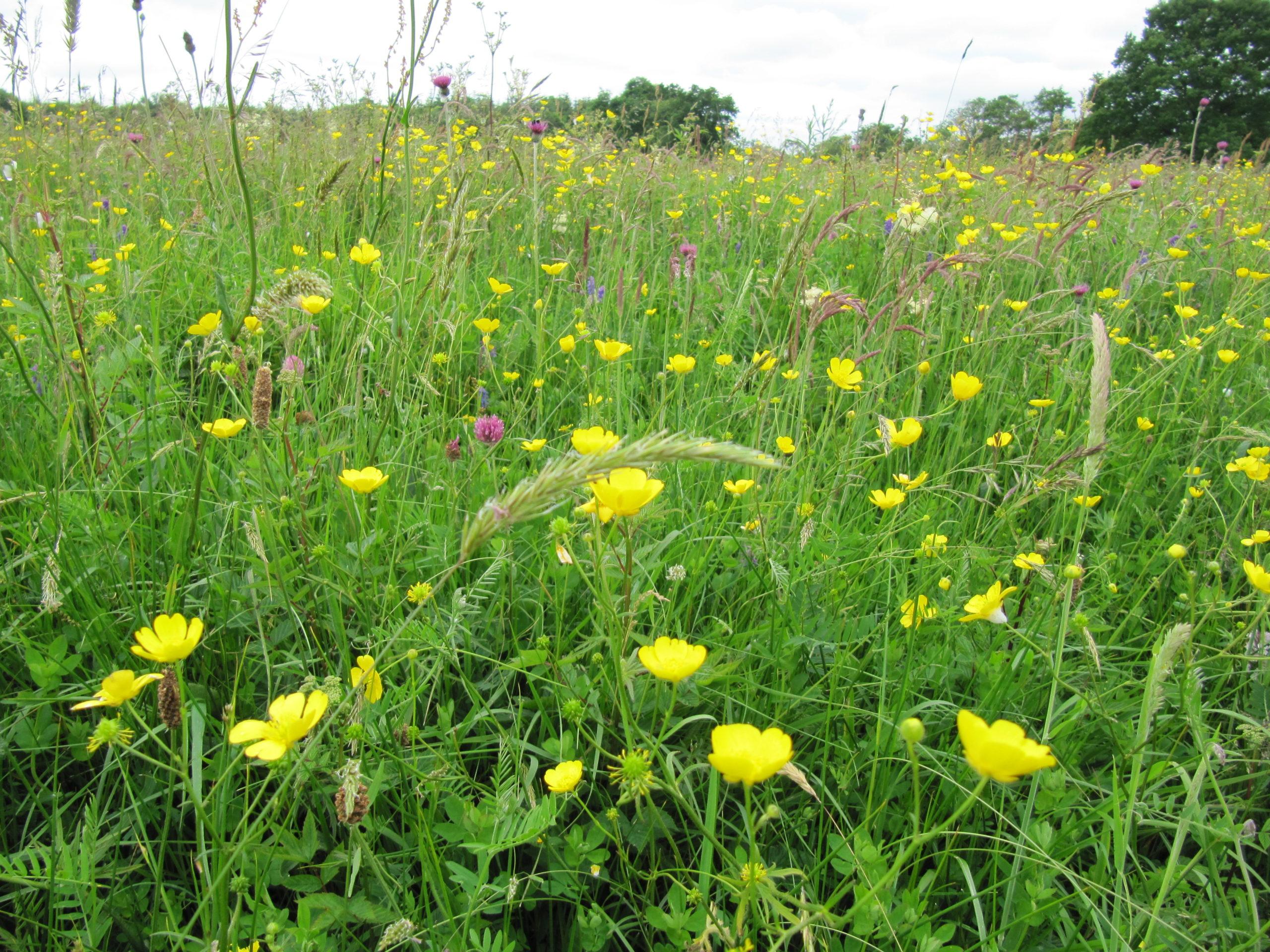 Grassland Overview by Fionnuala O'Neill ©NPWS