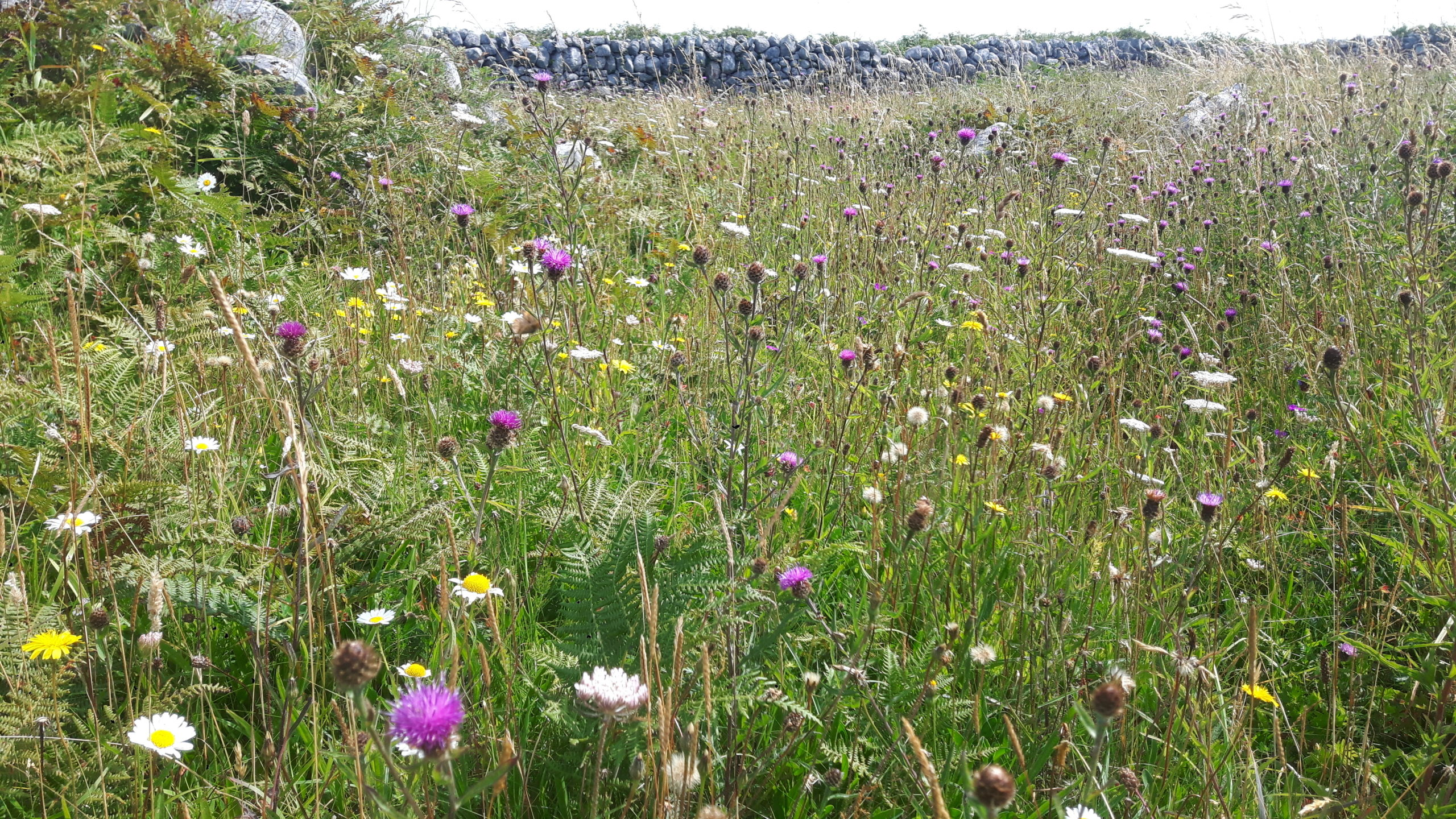 Grassland on Inis Oirr by Maria Long