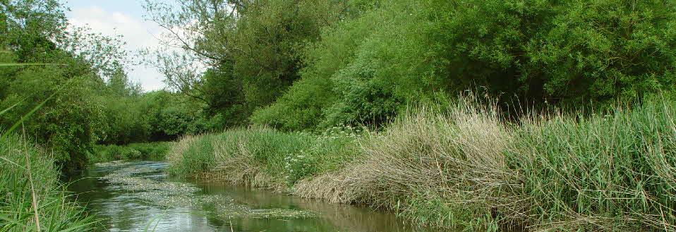 River Avon at Milston