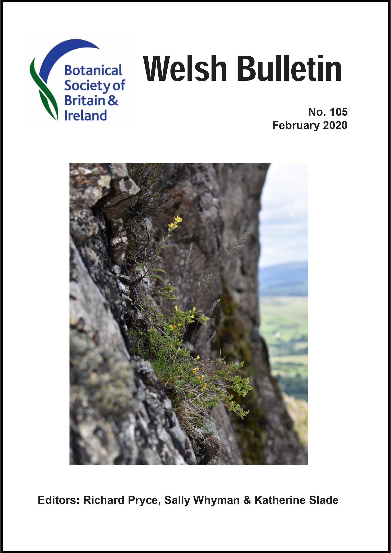 Welsh Bulletin No 105